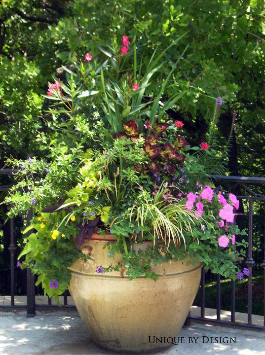 291 Best Images About Container Gardening Unique By Design On Pinterest