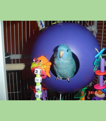 3 4 In Octagon Bird Toys : Best gidget dixie prince images on pinterest