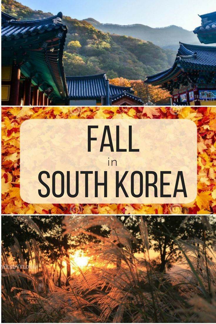 If you look up the best time to visit South Korea, fall is typically the answer that appears and for some very good reasons. The temperatures are cooling down from the super hot summer. #fall #autumn #southkorea