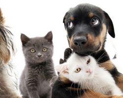 LOS ANIMALES COMO GATOS Y PERROS TIENEN ALMA COMO LOS HUMANOS