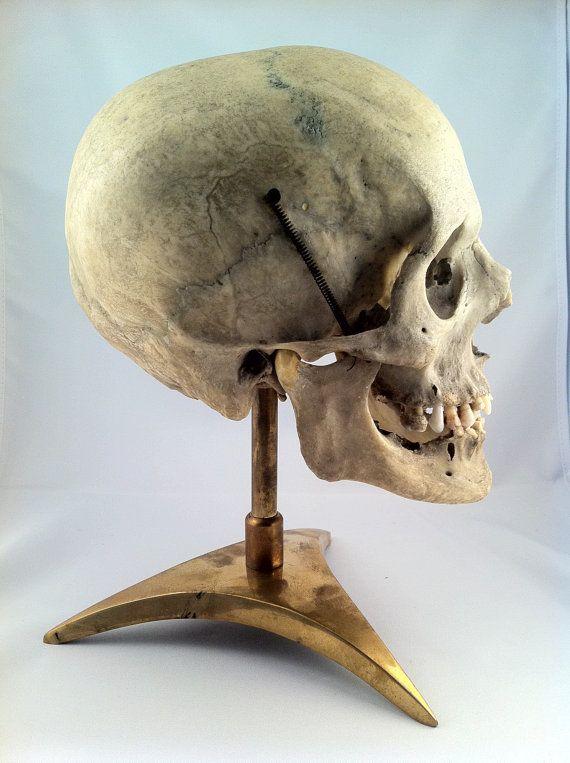 best 25+ real human skull ideas on pinterest | human skull, skull, Skeleton