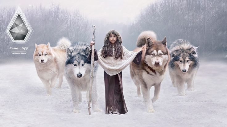 """""""The Pack"""" Artwork by Lib Creative.  Huge Alaskan Malamutes, Game of Thrones wolves inspired! Photo image manipulation, Adobe Photoshop high end retouching, creative photography."""