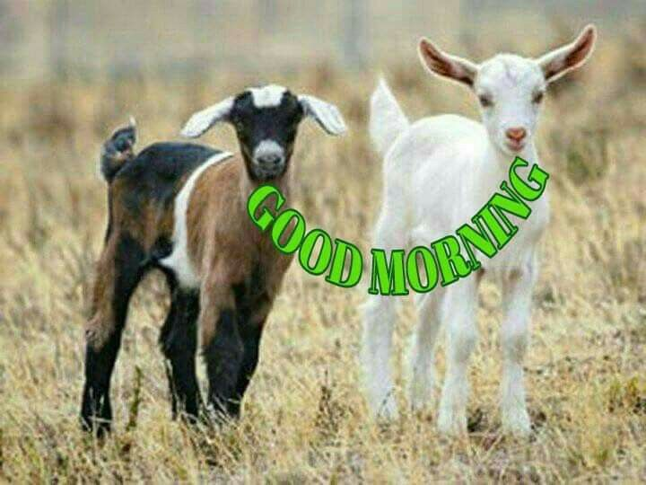 Pin By Nithya On Good Morning Images Good Morning Images Good Morning Morning Images