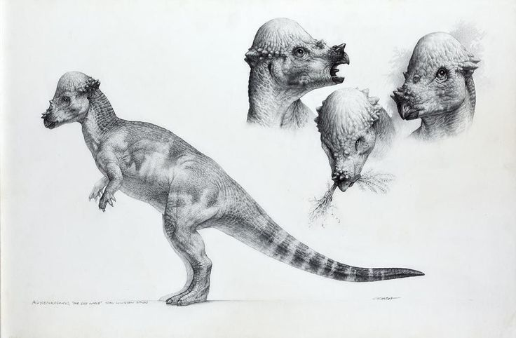 "jptopps:  dinosaursandotherawesomestuff:   Pachycephalosaurus, the Lost World: Jurassic Park concept art by Mark McCreery (1996/97).  I really, really love ""Crash"" McCreery's work.  His work on the Jurassic Park franchise is so iconic. This piece is particularly stunning.  I wish we could have seen more of the pachy in the JP films."