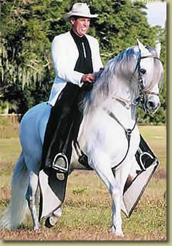 Paso Fino Puerto Rico  Excelent horse breed typical of P.R.