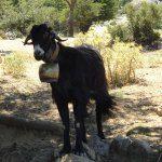 Onbekend Kreta excursie