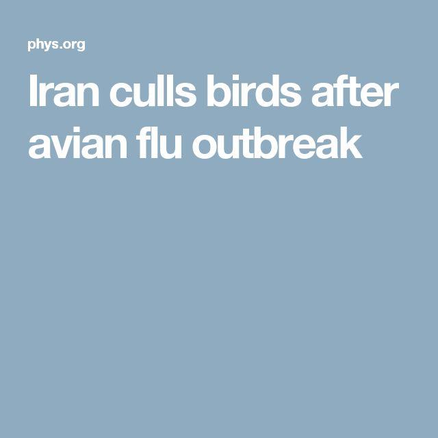 Iran culls birds after avian flu outbreak