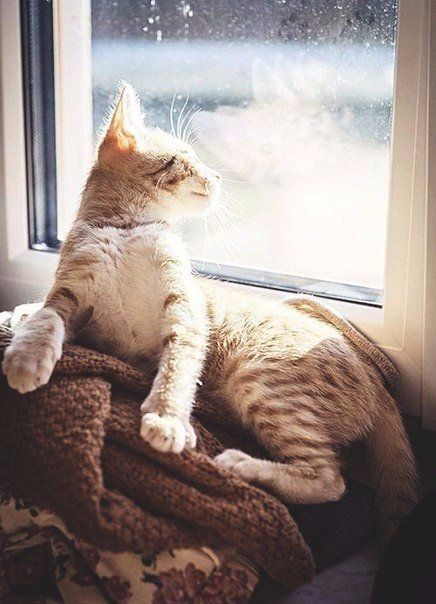 #cat #sweater #blanket #window #warmth #cozy #kind
