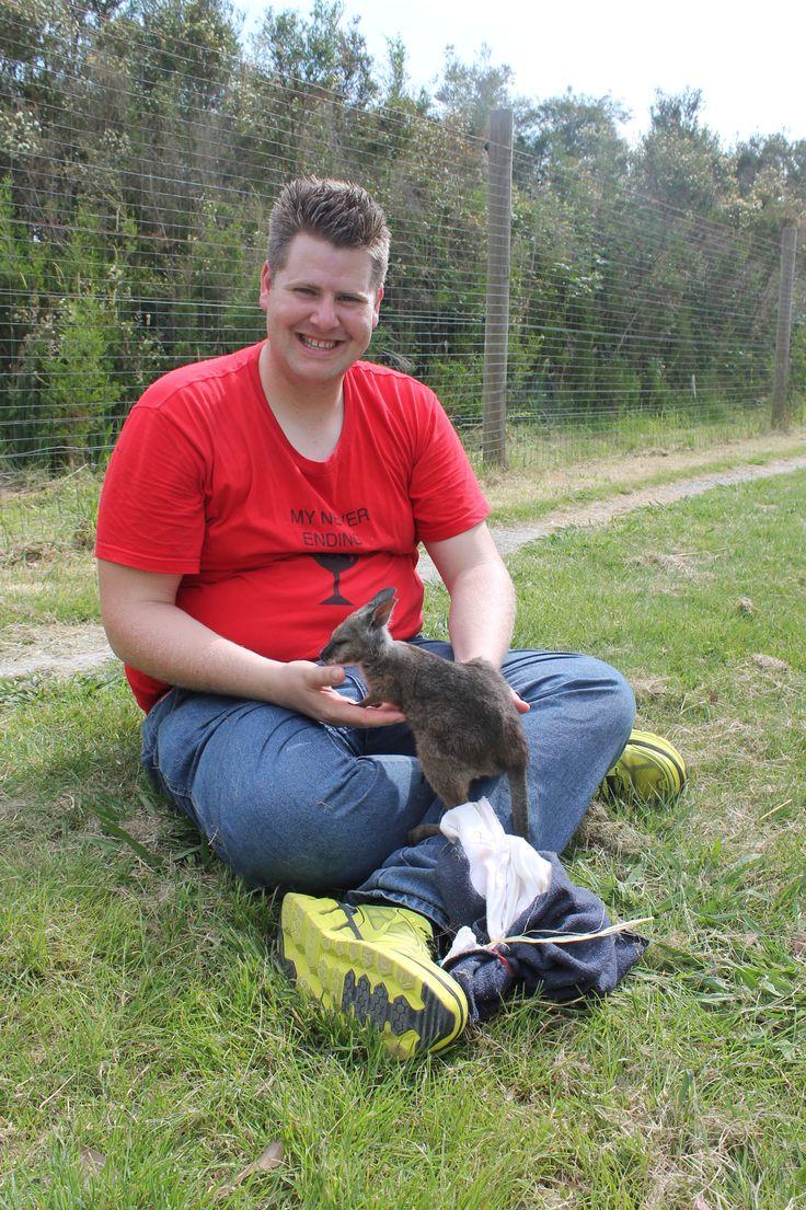 Animal Encounter -  Wallaby