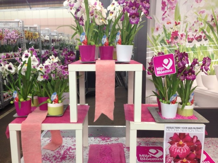Miltonia orchid stand @ Waterdrinker Aalsmeer, by Decorum Plants