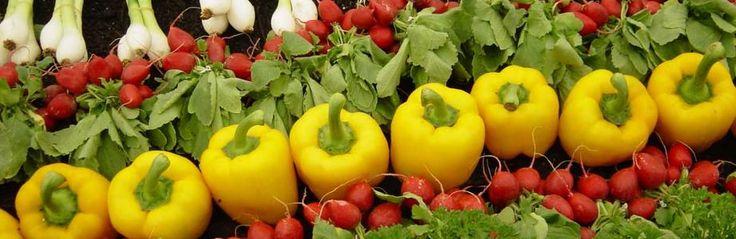 Φτιάξτε μόνοι σας σπιτικούς κύβους λαχανικών   agrotikabook.gr
