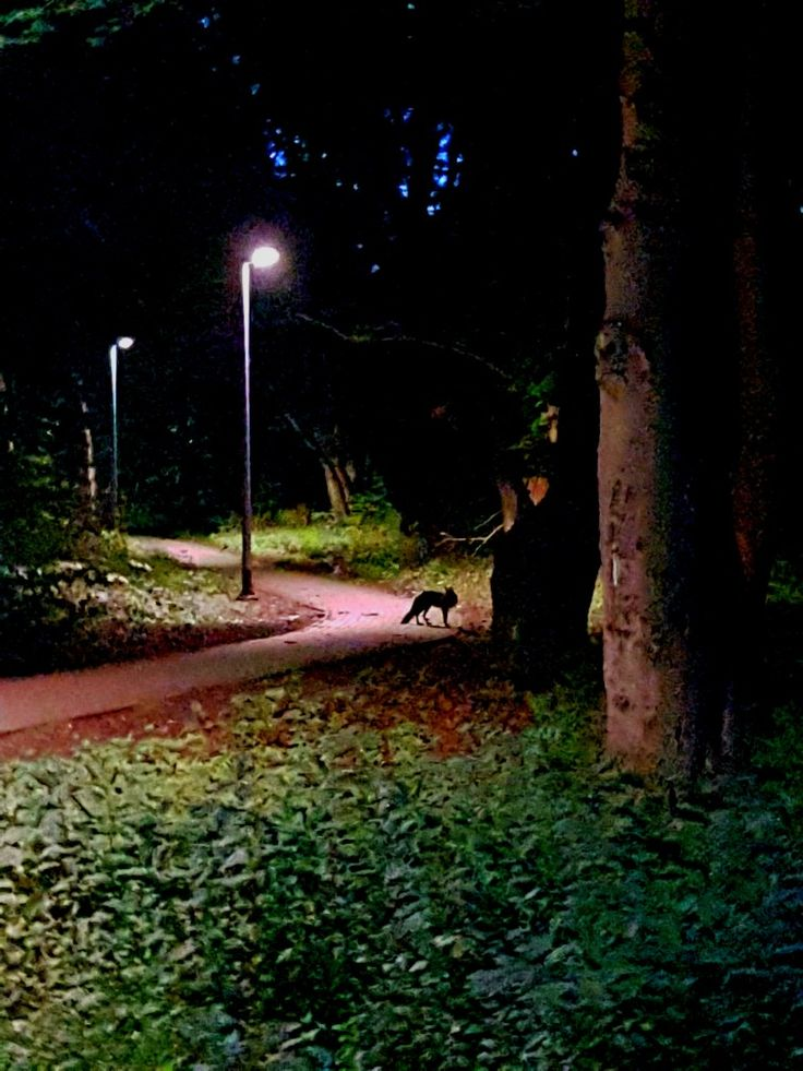 Fox in the forest, nighttime