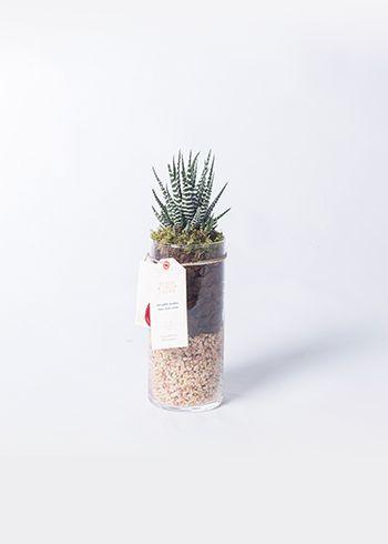KALAHARI | Yeryüzünden bir kesit sunan Kalahari hem evlerde dekoratif olarak kullanılabilirken ofislerde de rahatlıkla yaşayabilir ve sıkıcı hediyelere doğal ve canlı bir alternatiftir. | Bloom and Fresh