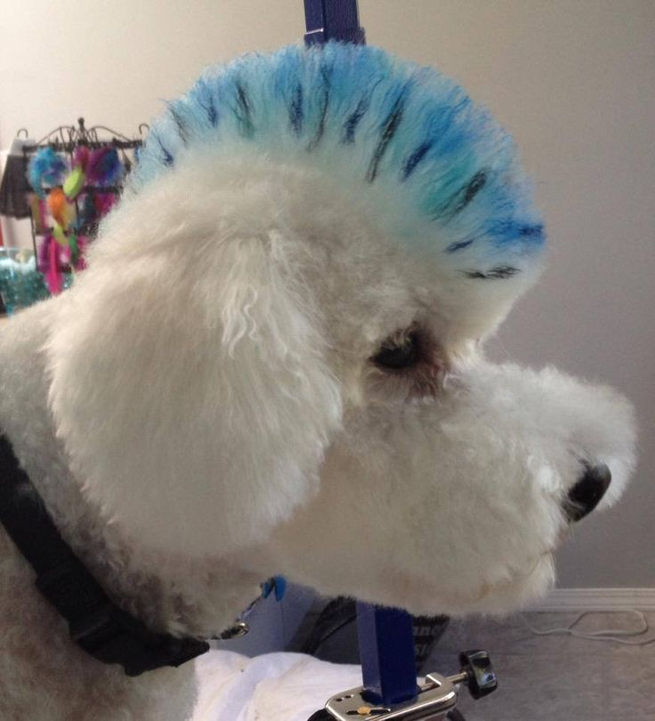 181 best ideas for the shop images on pinterest dog grooming creative grooming mostly mischief solutioingenieria Image collections