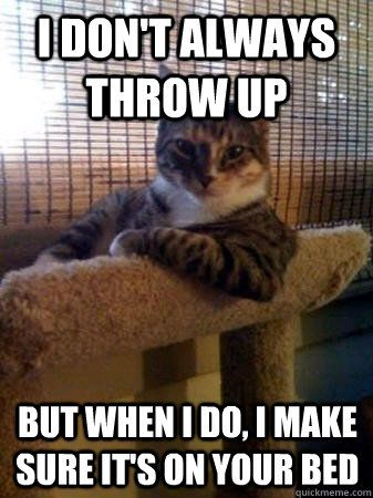 146 Best Images About Funny Cats And Memes On Pinterest