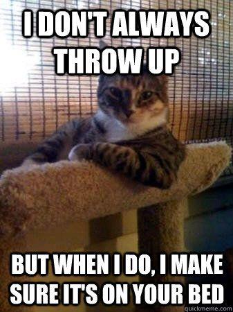 I Don T Always Rape Cats