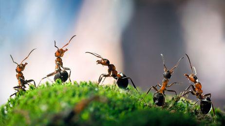 astuces pour faire fuir les insectes l aide d huiles essentielles si vous avez un probl me de. Black Bedroom Furniture Sets. Home Design Ideas