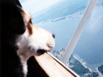 Smaller, pet friendly airlines can be a great alternative for travel with your pet