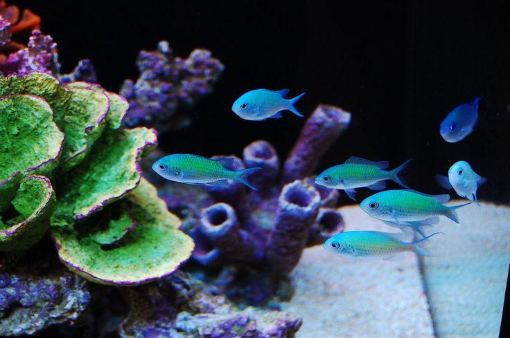 Akwarium morskie stylowe