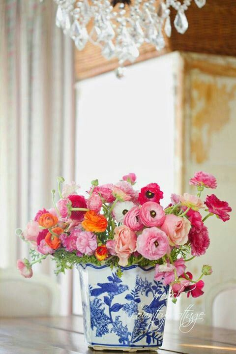 gorgeous, colorful ranunculus in a blue and white Chinese planter