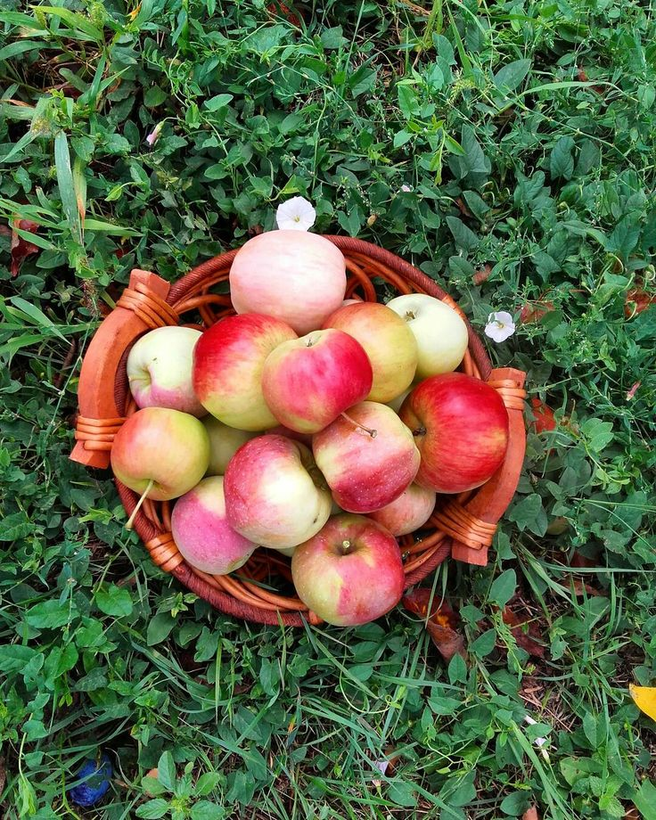 Autum is here🍎🍎🍎🍎