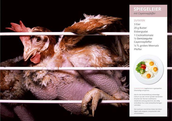Käfige für Legehennen werden gestapelt, die Hühner legen und legen und ziehen...