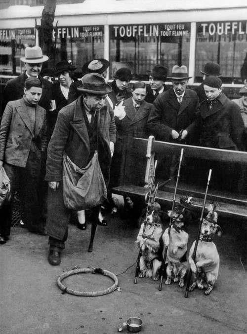 Dog trainer, 1930: Trainer 1930, Picture, Dogs In, Vintage Dogs, 1930 Dogs, Trainers, Paris Dogs, Animal