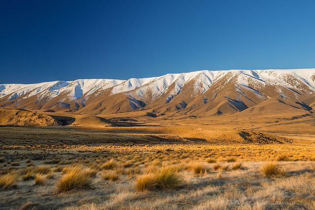 Photographic Print | Tussocks, Hawkdun Mountain Range, Sunset, Central Otago : Sisson