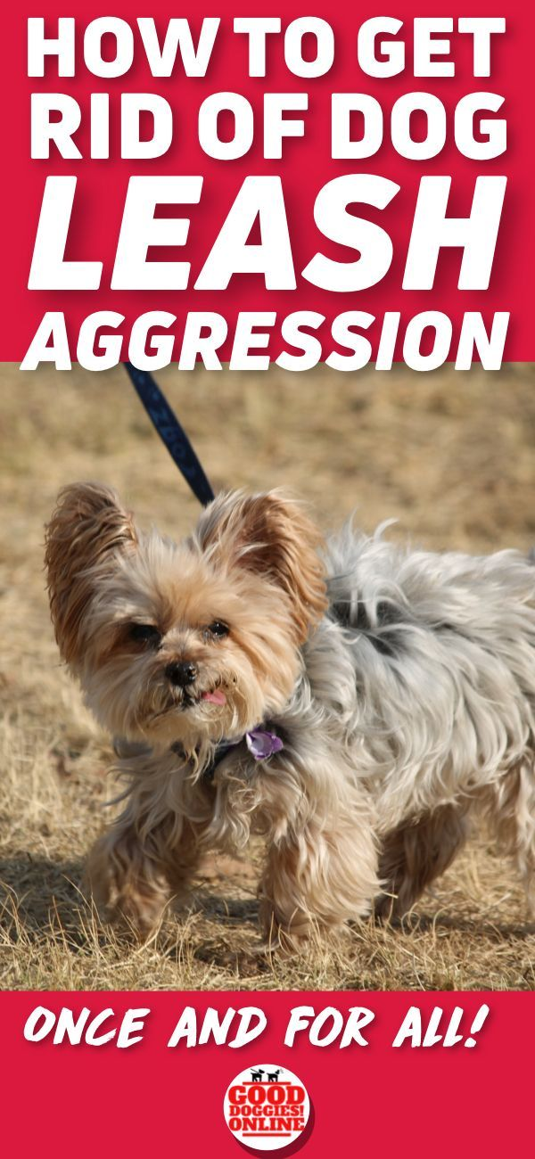 how to get rid of an aggressive dog