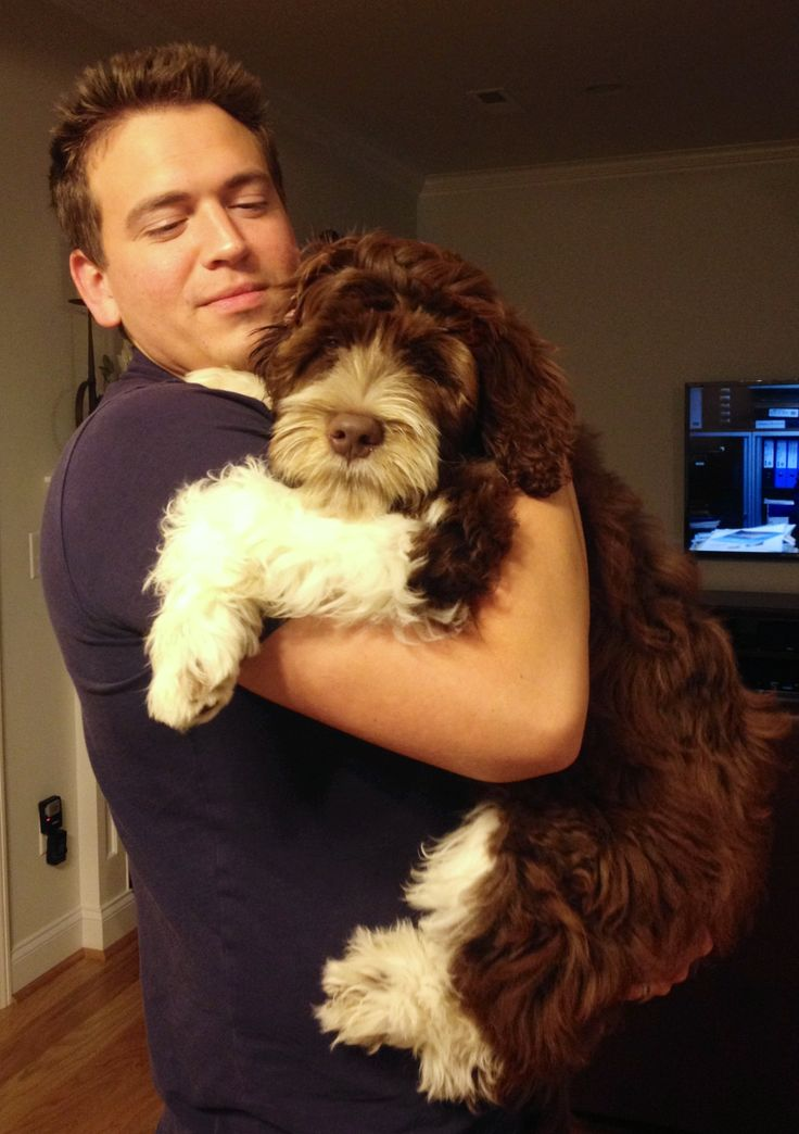 Portuguese Water Dog. Cutest picture!