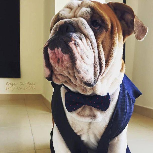Baggy Bulldogs | BaggyBulldogs