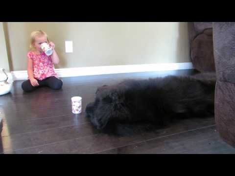 Toddler Invites Her Dog To A Tea Party- Wait 'Till You See What Happens When She Brings Out The Cookies
