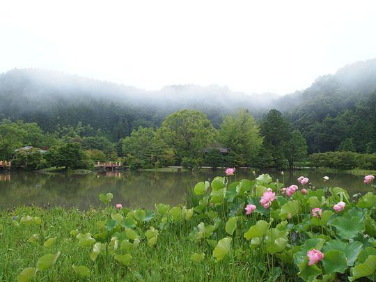 Summer of SHIRAMIZU-AMIDA-DOU 白水阿弥陀堂の夏