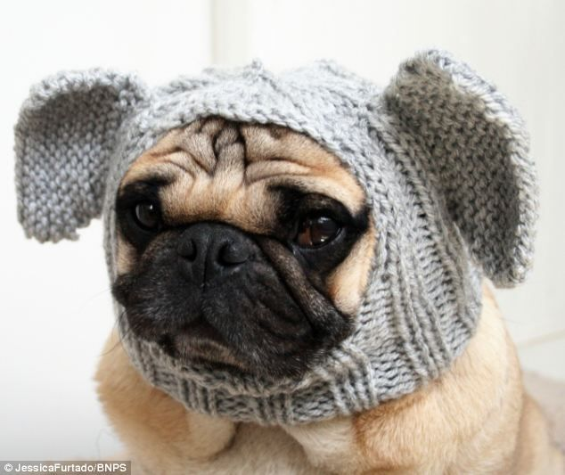 Pug Balaclava Knitting Pattern : As if they werent ugly enough already: English student ...