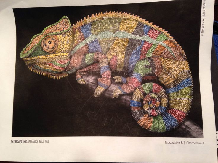 Chameleon 3 By Thomas G IntricateInk Coloring BooksChameleonsPencil