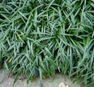 tipos de gramas mais usadas
