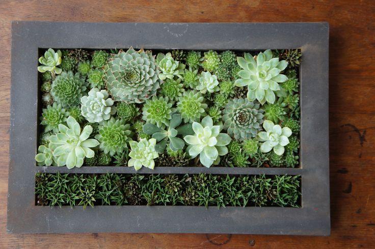 Succulent wall - d'JARDIN