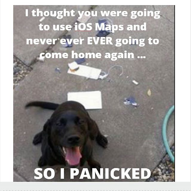 """Funny Dog Meme    NOTE: Pinned from the """"Smiles Live Here"""" Instagram Account where you can check out more great humor!"""