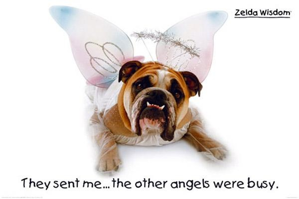 bulldog angels bulldog angel dog related quotes inspiration humour an 9467