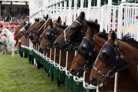 Visit #racedayratings.co.uk & Get all the #information #about #Horse #Racing #Tomorrow on the daily basis also get best racing Bet tips from our advisor.