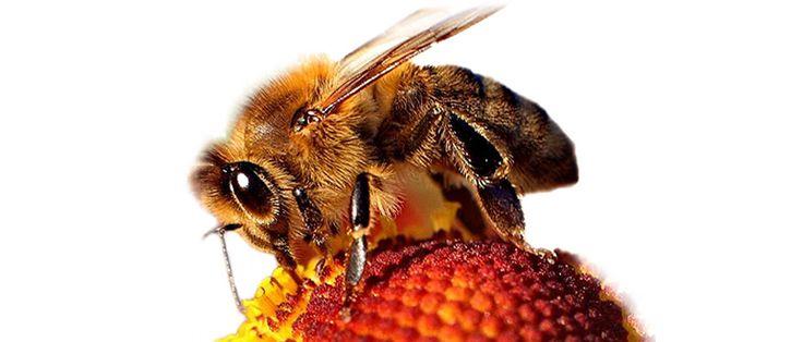 Profil jady owadów to test alergiczny, który składa się 2 alergenów. Służy do diagnostyki z krwi alergii na jady owadów błonkoskrzydłych. W jego skład wchodzi jad pszczoły i jad osy.