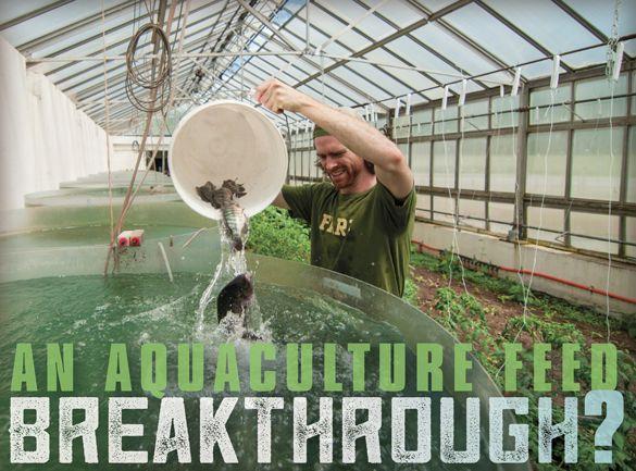 A breakthrough in fish-free aquaculture feed? | Algae Industry Magazine