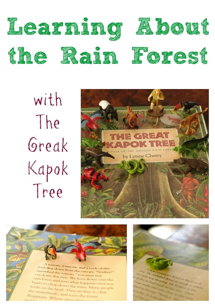Learning about tropical rain forests with great literature and the Rain Forest TOOB, a gift from our friends at Safari Ltd.