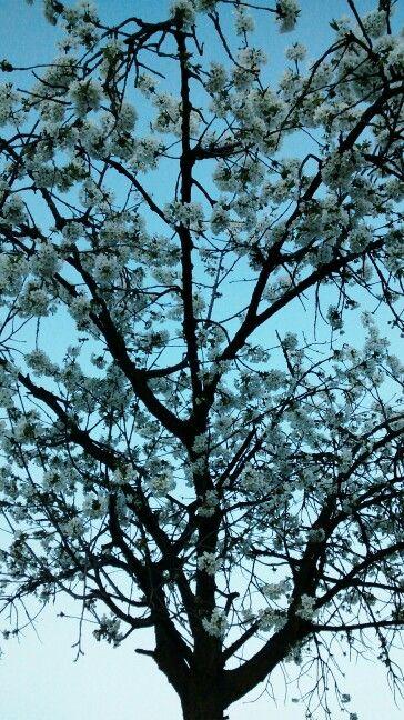 Primavera dentro