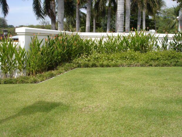 Best 25 zoysia grass ideas on pinterest mowing grass grow grass in shade and green ground - Drought tolerant grass varieties ...