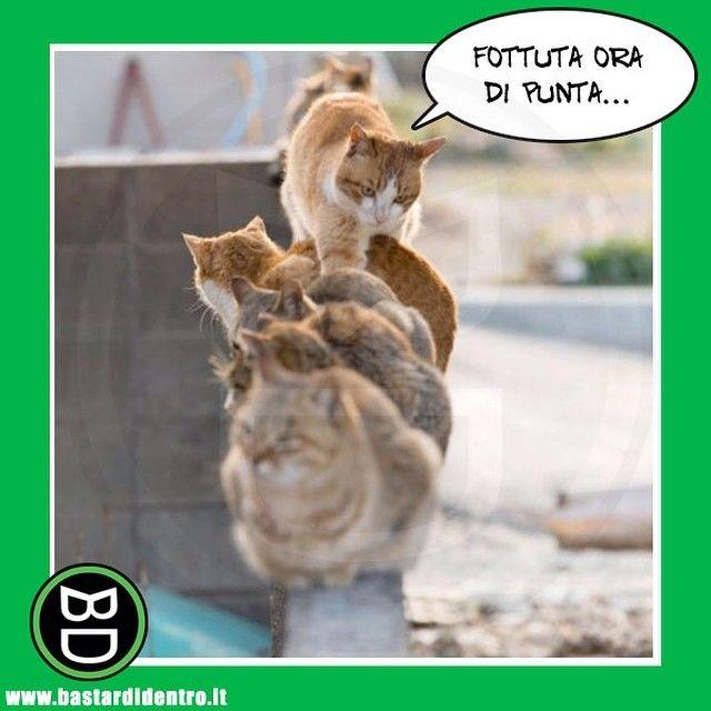 Non solo noi umani abbiamo questo problema! #bastardidentro #traffico #gatti www.bastardidentro.it
