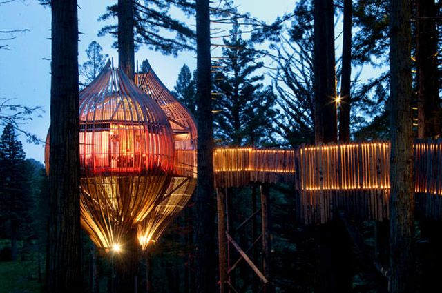 Pacific Environments Architects builds a treehouse in a redwood (33 feet high) near Auckland, NZ. Night view.