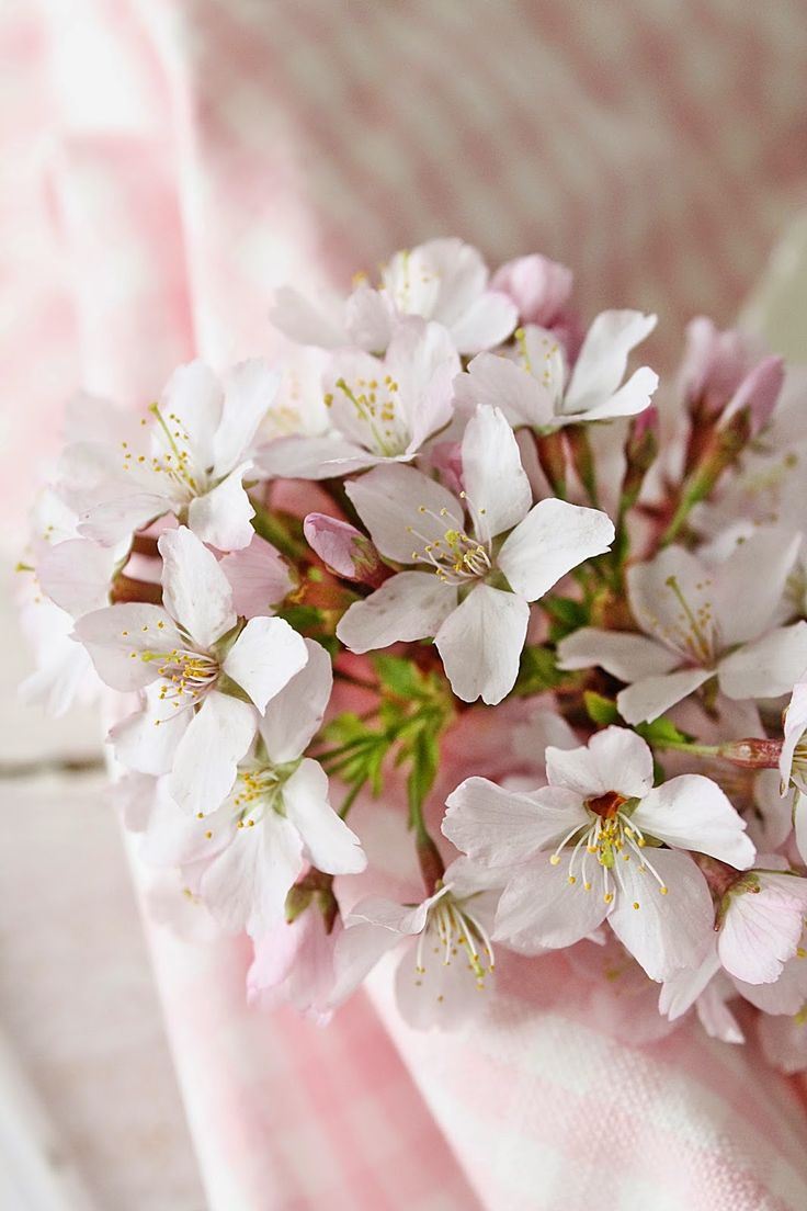The best images about spring is blushing on pinterest