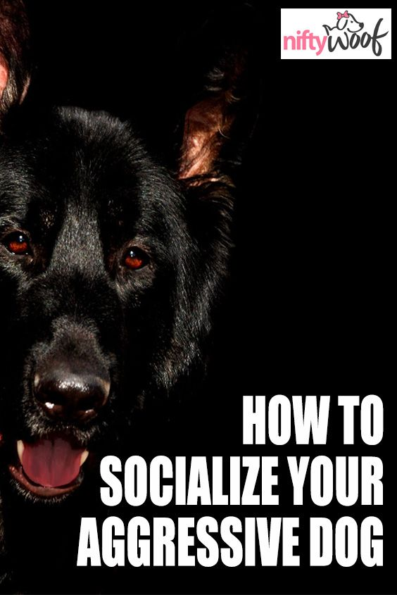 How To Socialize Your Aggressive Dog Dogs Dog Puppy Puppies