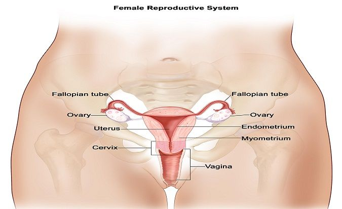 Endometrial cancer is also known as uterine cancer, as it begins to develop in the uterus of a woman. The uterus is an organ that is present in the pelvic region. This is where the development of foetal takes place